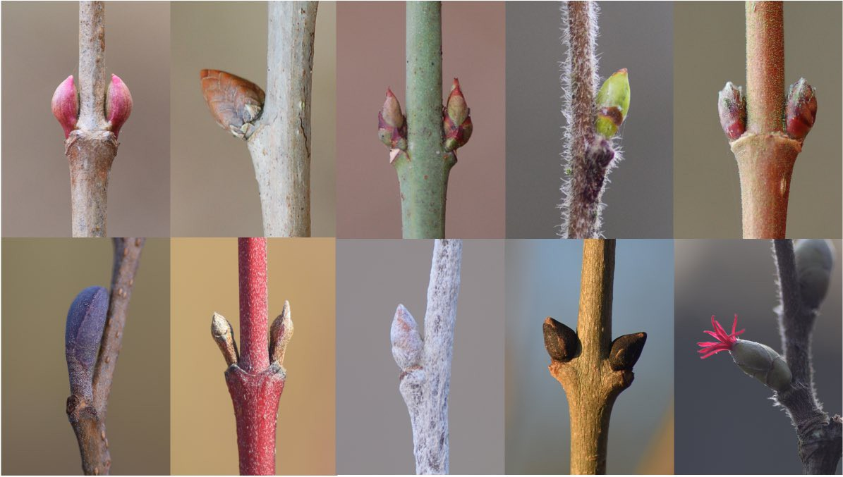 A picture of lots of different colourful buds on trees
