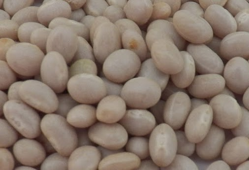 Are You Had To Try White Kidney Bean Extract For Weight Loss Or Diet Supplement I Had A Friend Th By Lenggog Medium
