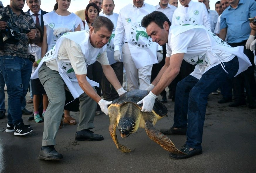 Work taking care of sea turtles in Maldives