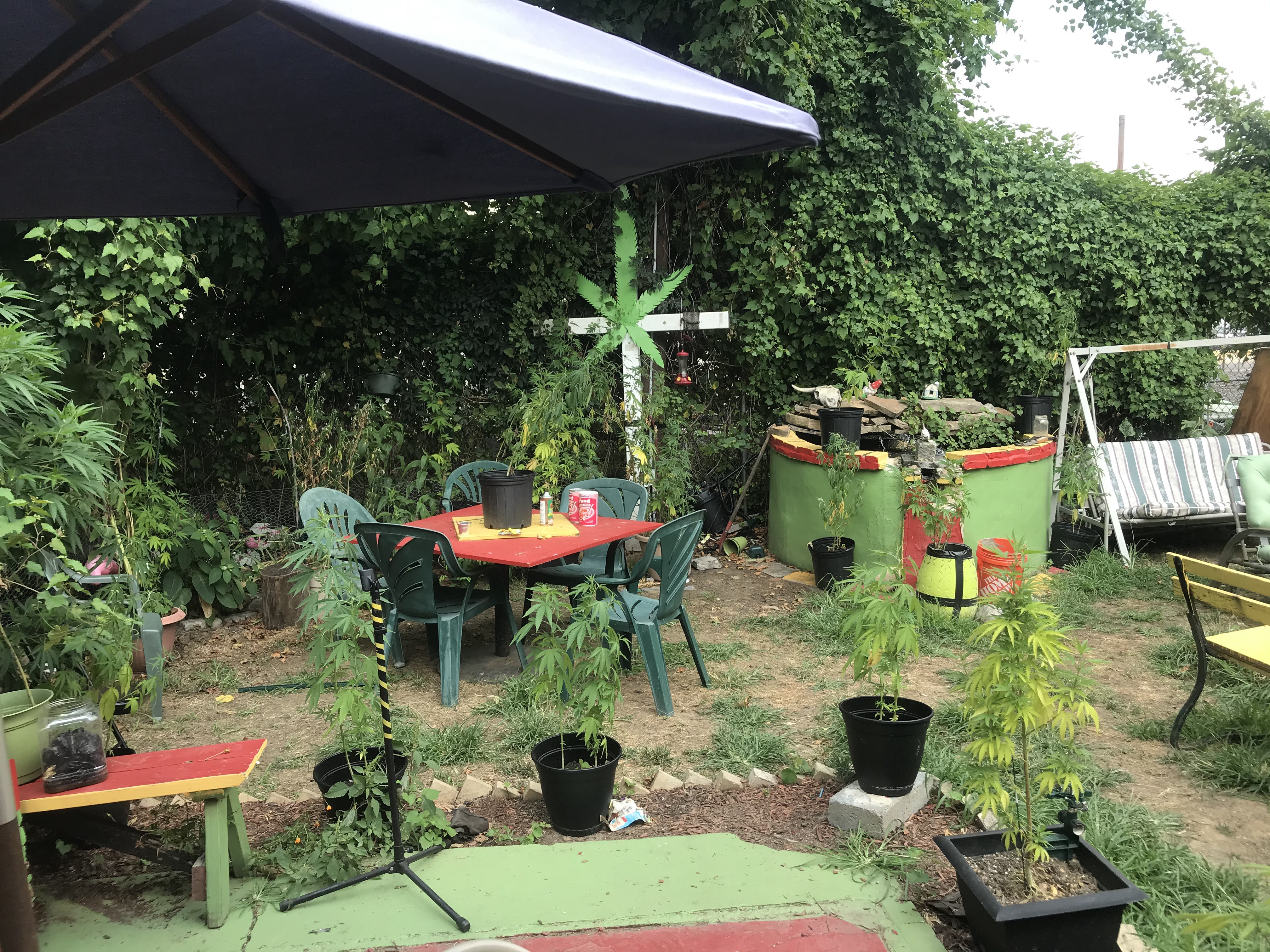 The backyard at NJ Weedman's Joint. It has places to sit, a coy pond, and various types of vegetation to admire.